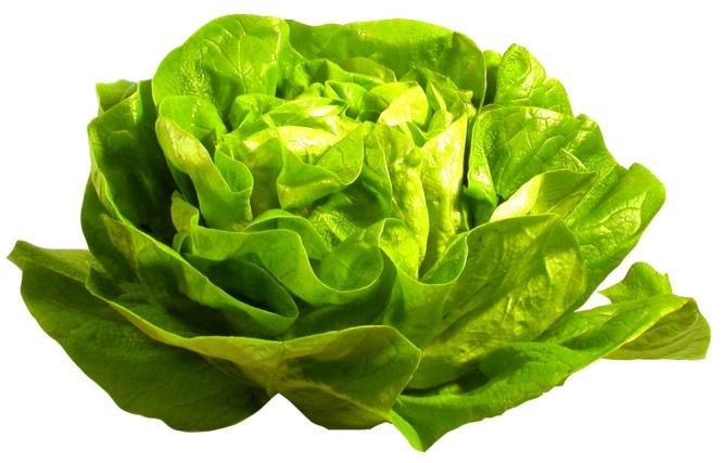Lettuce - calories, nutritional values and interesting facts